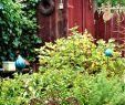 Deko Tiere Garten Schön Allotment