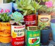Deko Vintage Garten Neu Plants In Vintage Tins