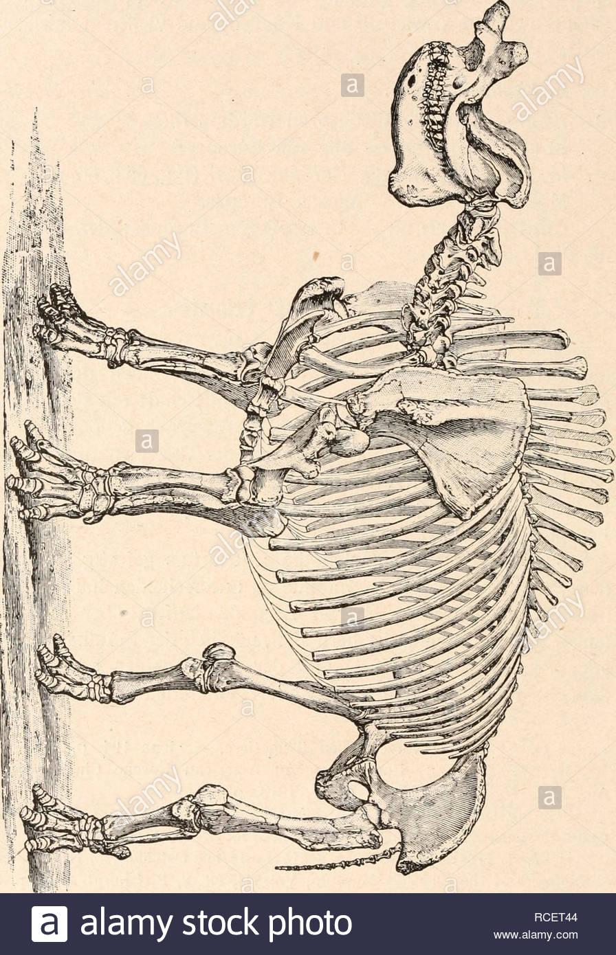stmme der wirbeltiere evolution paleontology vertebrates 870 stmme der wirbeltiere untere grenze der lemuroidea ist noch nicht sichergestellt da ber einreihung gewisser gattungen aus dem unteren tertir noch groe meinungsverschiedenheiten bestehen einzelne forscher be c3 2 o 2 t3 3 1 o d ct 3 c pr co c fr o c t c co gtjquot 9 c co 1 d g rtgt 3 3 oq pj o 3 nro 3 orp quot n 8 u 1 a e 3 z cs o r 1 d o 3 3 ngt t gtv pt 25 tu su co o y 3 3 o 3 o rt 3 gtquot o co h r t agt 3 o 1 trachten mixodect RCET44