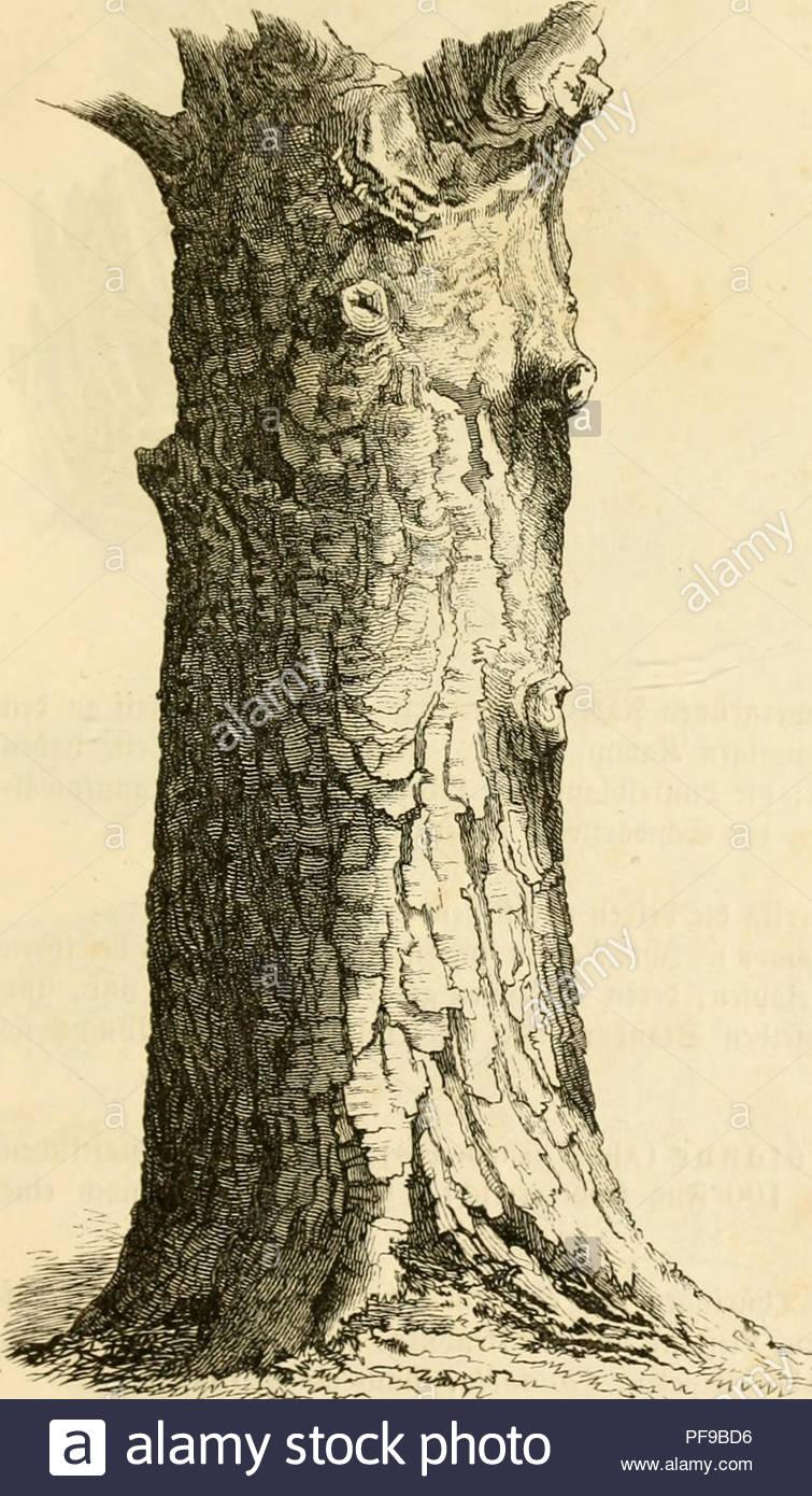 deutsche waldba ume und ihre physiognomie les arbres 2a 9 bcftlic lunmiclic unt c a c nnia a a ticfgrunbiflcin odtvm iuic mit bcqa nftiiicn mciftcn iimn otcn am fhutlicln qbud a ii ton fic en 120 hi and 15 1 sa n cn ihmlnitct ctmrotil ftc 3 m sa l onu n iied unntcn a ltre fann ma t alte sta mme b ect reiber tiq t etmiva tem auf a viirfen uiiferec v vr hniet cs ii ivuuqen unbe elne j atieiifclh cn n ant umren tonne um imgenfen vhtfauen hcit ber saline j eturme om rir seite c d t fta tue ftel untertja n iiif sta sriniltevn tic auf mme frechette rct ftiv ern 3u cc pf9bd6