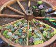 Deko Wagenrad Frisch What An Amazing Gardening Idea