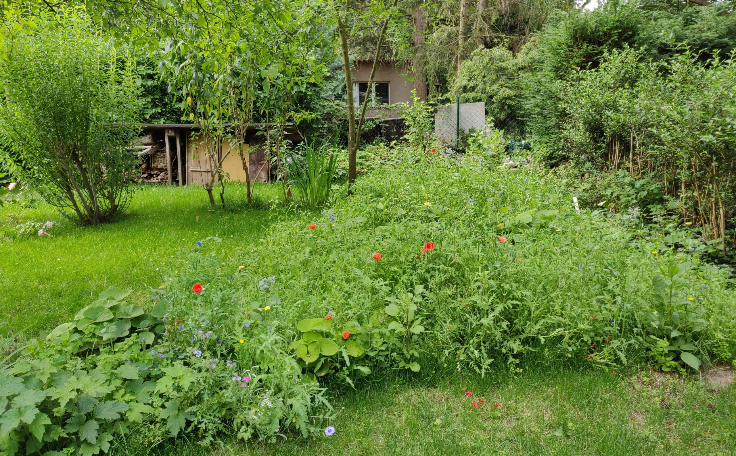 permakultur garten anlegen schon gemeinsam fur mehr artenvielfalt wildblumenwiese anlegen of permakultur garten anlegen 1 scaled