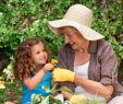 Dekokugeln Garten Rost Inspirierend Baywa Kw11 by Russmedia Digital Gmbh issuu