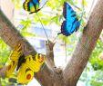 Dekostecker Garten Schön Hakacc Schmetterling Einsatz 50 Stück 9 Cm Garten Schmetterling ornaments Wasserdicht Deko Schmetterling Für Innenbereich Außenbereich Garten