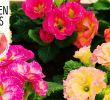 Diy Deko Garten Elegant Diy Frühlingsbepflanzung Mit Bunten Primeln Frühlingserwachen Volmary Gartentipps