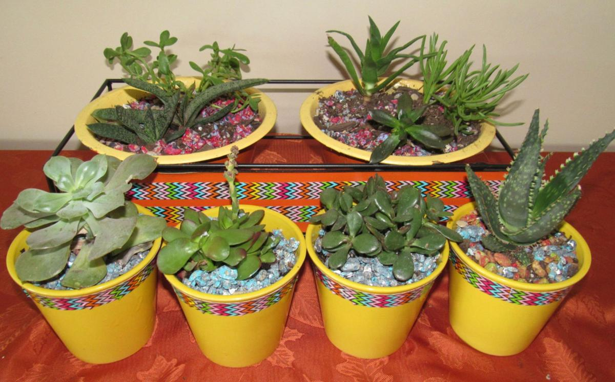 Do It Yourself Elegant Do It Yourself Succulent Displays