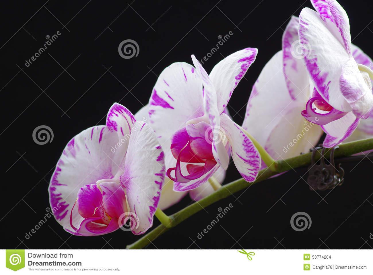Faschingskostüme Für Damen Schön 飞蛾03butterfly orchid07 04 orchid07 04