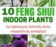 Feng Shui Garten Inspirierend 10 Feng Shui Indoor Plants to Spruce Up Your Interior Decor