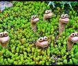 Frosch Deko Garten Schön Baby Monsters Hands Eye Stalks and More