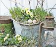 Frühlingsdeko Für Den Garten Best Of Garten Dekorieren Zu Ostern Und Fröhlich Festliche