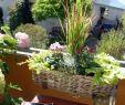 Frühlingsdeko Für Den Garten Genial Roter Farbtupfer Ein Pflanztipp Für Den Balkon Im Herbst