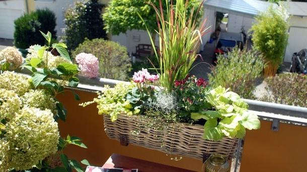 roter farbtupfer ein pflanztipp fuer den balkon im herbst