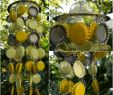 Frühlingsdeko Für Den Garten Schön Diy – Jetzt Den Garten Für Den Frühling Fit Machen
