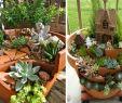 Frühlingsdeko Für Den Garten Schön Miniatur Gärten Für Feen Aus tontöpfen