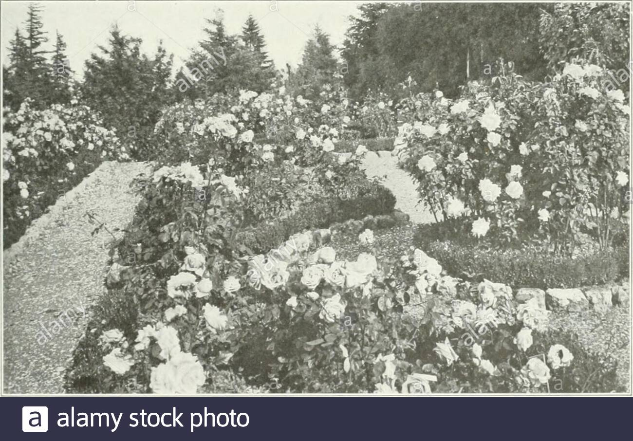 beautiful gardens in america section of a rose hedge bordering an avenue in portland ore plate 161 plate l62 rosecrest portland heights portland ore mrs f i fuller jn tr r j a m k m jf fr rt jrahpg s2rv5v w j lt ls 2s plate 163 a garden in three terraces cliff cottage elk rock portland ore peter kerr esq 2AGC94W