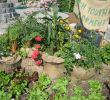 Günstige Gartenideen Inspirierend 55 Günstige Gartenideen Einen Schönen Garten Mit Wenig