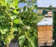 Galabau Nrw Schön Die 15 Besten Bilder Zu Früchte