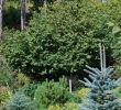 Garden Deko Elegant ЕРена Конькова Ландшафтный дизайн СтиРь Natur Garden