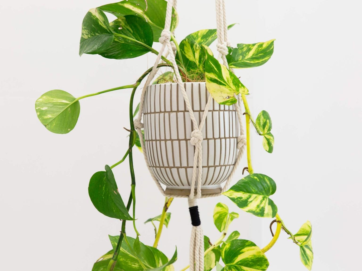 leo plant hanger 0d 1536x1152