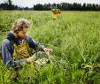 Garten Am Hang Ideen Bilder Best Of who Buys organic Food Different Types Of Consumers