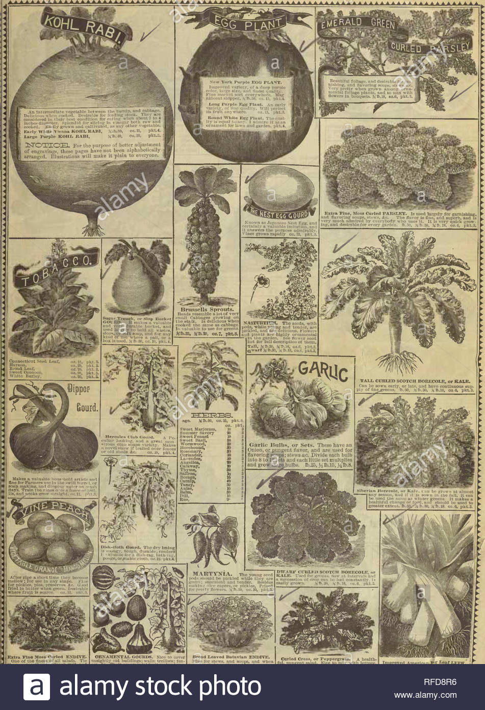 rh shumway garden guide nursery stock illinois rockford catalogs flowers seeds catalogs ve ables seeds catalogs extra fin mosb curled endive one of ttie finest of all salads tie the topi to her to blanch well and will soon be e white tender and crisp gt 15 oz6 pkt3 orna7viental goukds nice to cover unsightly old buildings walls trellises fen ces ampc their ornamental fruit makes beau tiful and very attractive display when hang ing on its vines mixed 3ro20 oz6 pkt3 broad i1b25 kb 15 oz 6 pkt3 cmrled cress or peppergrass a hea RFD8R6