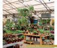 Garten Ambiente Schön Garden Retailer 02 17 by Tpk Media & events issuu