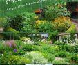 Garten Anlegen Pflegeleicht Elegant Pflegeleichter Garten Reizend Garten Ideen