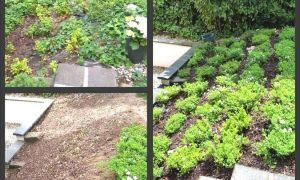 30 Inspirierend Garten Bepflanzung