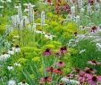 Garten Bepflanzung Neu Bettina Jaugstetter – Büro Für Landschaftsarchitektur