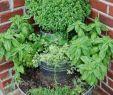 Garten Bepflanzung Planen Best Of 27 Luxus Garten Büsche Schön