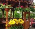 Garten Dekoration Elegant Kwatera Prywatna Alga Promocje Od 1 Lipca Ul