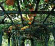 Garten Dekorationsideen Schön Machen Sie Sich Bereit Für Das Leben Im Freien tolle Idee