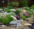 Garten Dekosteine Luxus 10 декоративных растений дРя бедной почвы