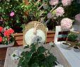 Garten Im Landhausstil Luxus Hasi Geniesst Schon In Vollen Zügen sonne ☀️ Ich