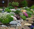 Garten Ratgeber Einzigartig 10 декоративных растений дРя бедной почвы