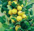 Garten Ratgeber Frisch Stachelbeeren Im Garten Pflegen – Gesund Und Lecker