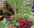 Garten solar Deko Frisch Full Sun Arrangement with Phoenix Robellini Palm Coleus