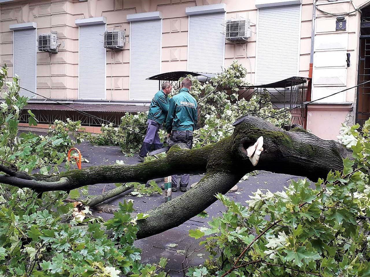 Garten Statue Schön Буря зваРиРа біРьш 22 дерев та зірваРа дроти фото