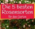 Garten Umgestalten Genial Die Schönsten Rosensorten Für Ihren Garten