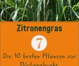 Garten Umgraben Frisch Pflanzen Gegen Mücken Die 10 Besten Pflanzen Zur