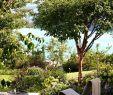 Garten Umgraben Inspirierend Garten Und Landschaftsbau Leipzig Garten Wasserbecken Beton