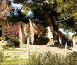 Garten Versand Best Of Garten Fiedler Gera Genial 28 Reizend Vertikaler Garten