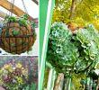 Garten Verschönern Best Of Herrlich Saftigen Planters sofort Verschönern Ihres