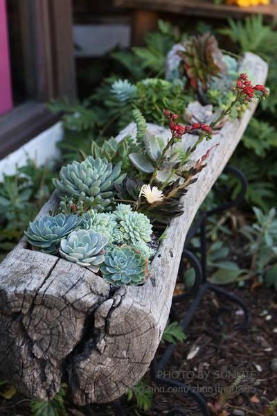 herrlich saftigen planters sofort verscha nern ihres hauses
