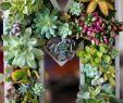 Garten Verschönern Neu Herrlich Saftigen Planters sofort Verschönern Ihres