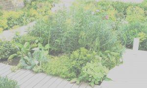 28 Schön Garten Zum Kaufen