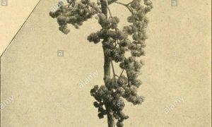 35 Schön Gartenbaum