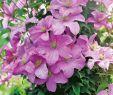 Gartenbedarf Onlineshop Best Of Kräuter Und Teepflanzen