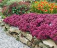Gartenbedarf Onlineshop Elegant Setpreis 8 Pracht Stauden