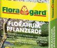 Gartenbedarf Onlineshop Frisch Floragard Florahum Pflanzerde 70l